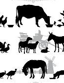 Farm animals in their environment