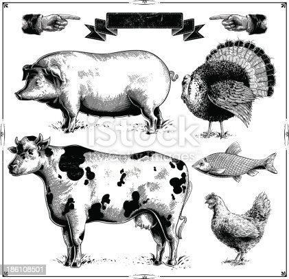 Domestic farm animals, (Pig, Turkey, Cow, Chicken, Fish.) vector .eps8