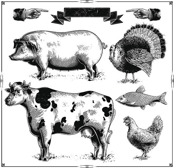 Farm Animals Domestic farm animals, (Pig, Turkey, Cow, Chicken, Fish.) vector .eps8 poultry stock illustrations
