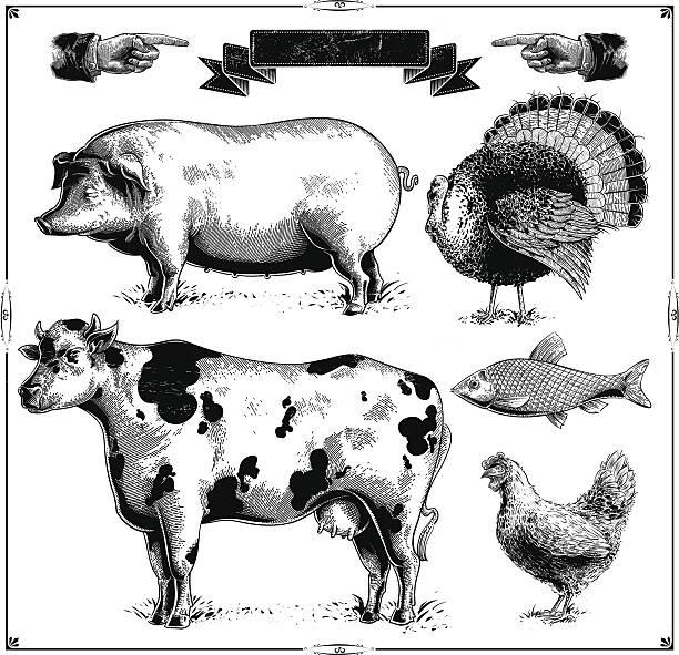 stockillustraties, clipart, cartoons en iconen met farm animals - pig farm