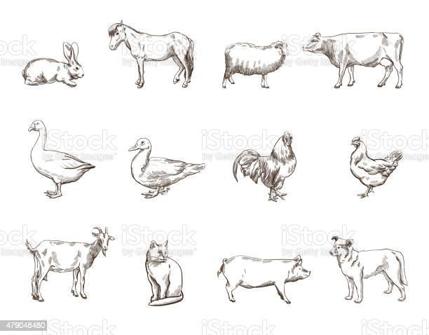 Farm animals vector id479048480?b=1&k=6&m=479048480&s=612x612&h=ug6azd4cov77turgqahf 38ajuus8xabvq9eybp8nvc=