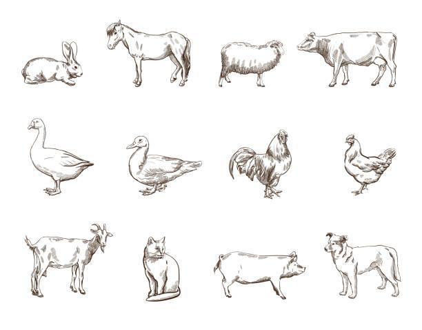 Farm animals Vector sketch of twelve farm animals silhouette  duck bird stock illustrations