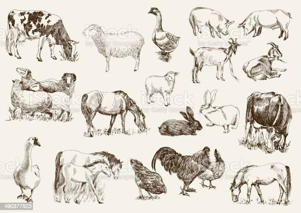 Farm animals vector id490377523?b=1&k=6&m=490377523&s=612x612&h=myptr0odlea gy3kdrj8vozu1xphx6q8crpirwaak2s=