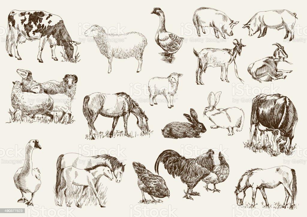 Animaux de la ferme - Illustration vectorielle