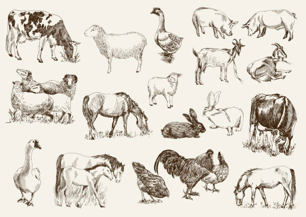 farm animals farm animals. set of vector sketches on a white background farm animals stock illustrations