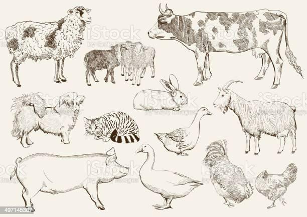 Farm animals vector id497145367?b=1&k=6&m=497145367&s=612x612&h=4bn9fx4h8c4w1vlsgv 3ojtkqj5c5 lohpdeze4p 6c=
