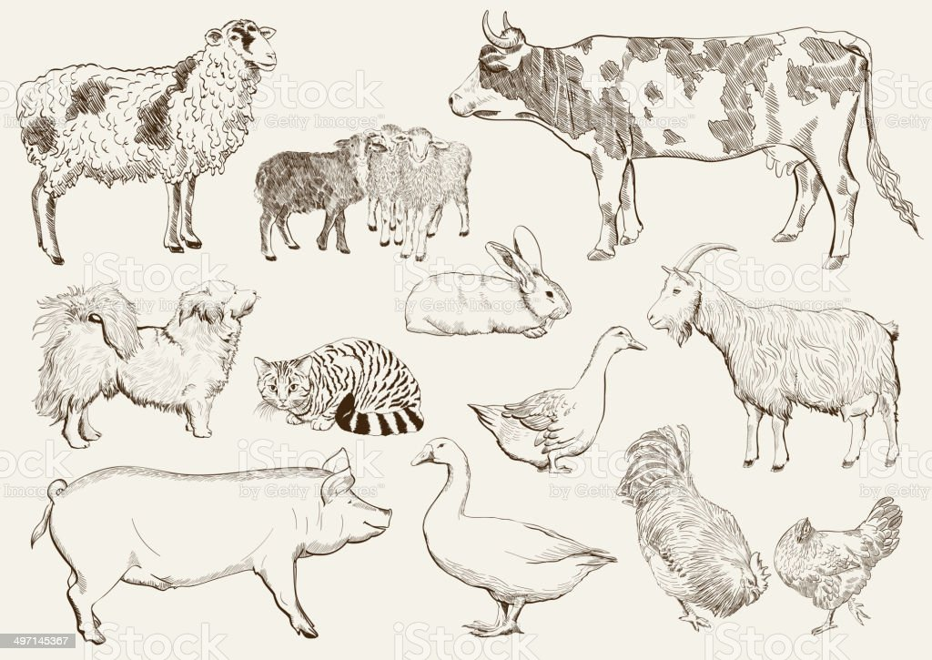 farm animals vector art illustration