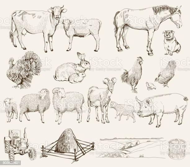 Farm animals vector id503522601?b=1&k=6&m=503522601&s=612x612&h=mwlztfruapxqm n8ltxu3v6lgvyxtncrkblbfbor3 s=