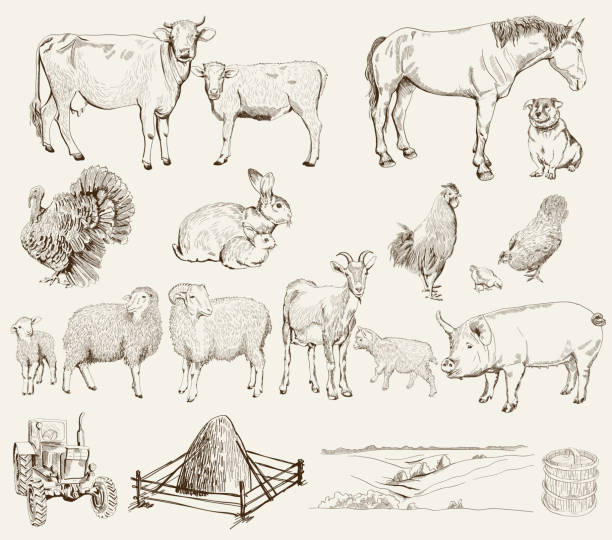 stockillustraties, clipart, cartoons en iconen met farm animals - pig farm