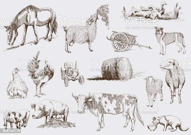 Farm animals vector id508195175?b=1&k=6&m=508195175&s=612x612&h=rzqyzkuhzomk9i txiojvqd8jcohoq2akpv30twiehg=