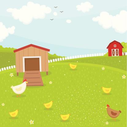 Farm chicken coop