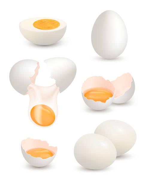 bildbanksillustrationer, clip art samt tecknat material och ikoner med gårdens ägg. realistiska chick ägg ekologisk mat gul äggula protein frukost omelett knäckt skal vektorbilder - ägg