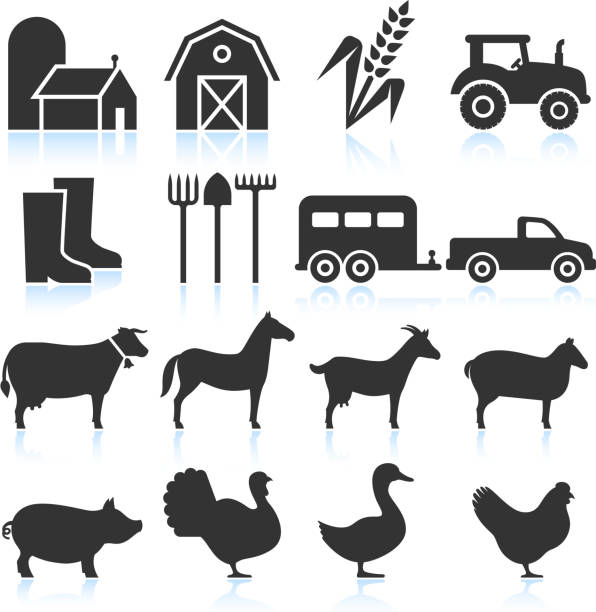 Farm Equipment and Animals black & white vector icon set Farm Equipment and Animals black & white set farm animals stock illustrations