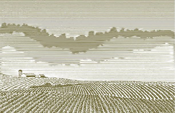 farm поле чертежа - граттаж stock illustrations