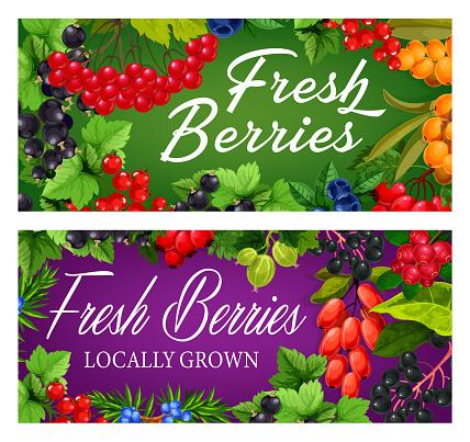 Farm garden, wild ripe berries vector banner