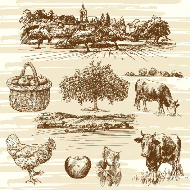 ilustrações de stock, clip art, desenhos animados e ícones de farm, harvest, rural landscape, hand drawn set - picking fruit