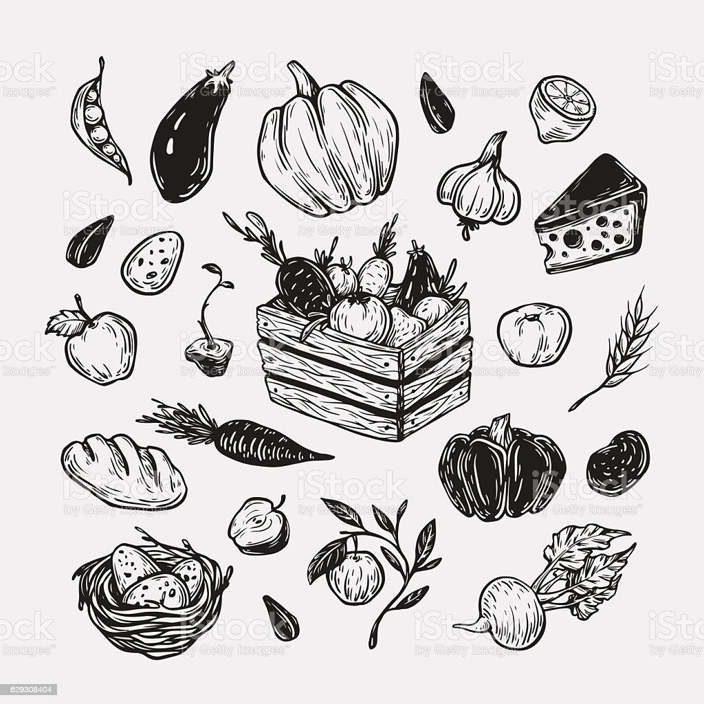 Farm, harvest, vegetables and fruits. vector art illustration