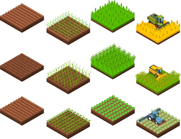 farm harvesting set isometric Farm harvesting set with isolated isometric square field section images at various stages of harvesting operations vector illustration corn crop stock illustrations