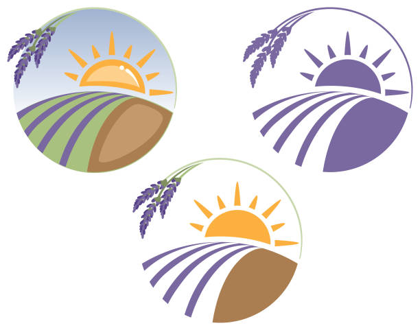 Best Crop Rows Illustrations, Royalty-Free Vector Graphics ...