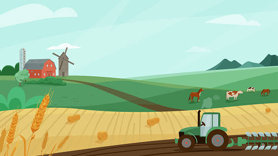 Farm landscape vector illustration with green meadow, wheat field, tractor cultivate earth. Nature summer or autumn scenery with barn, windmill. Countryside for organic production background