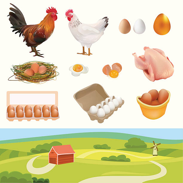 Farm Set with Rooster, Hen and other vector art illustration
