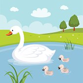 Farm. Swan and baby swans
