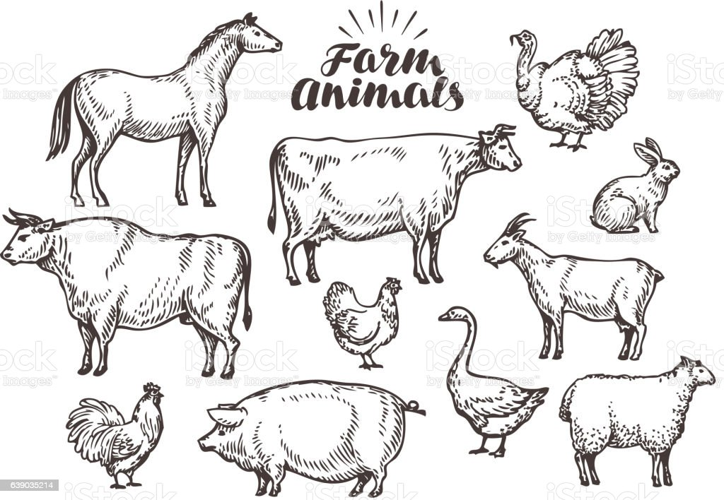 Farm, vector sketch. Collection animals such as horse, cow, bull vector art illustration