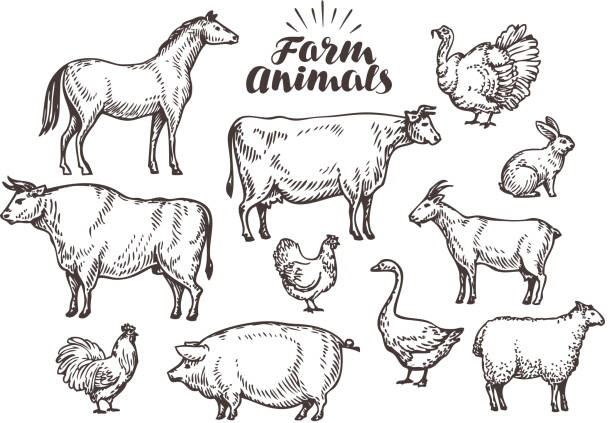 farm, vector sketch. collection animals such as horse, cow, bull - farm animals stock illustrations, clip art, cartoons, & icons