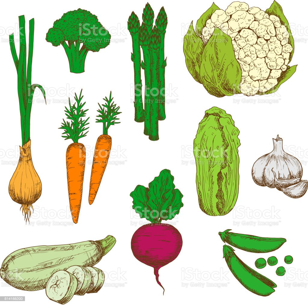 Farm vegetables retro color sketches vector art illustration