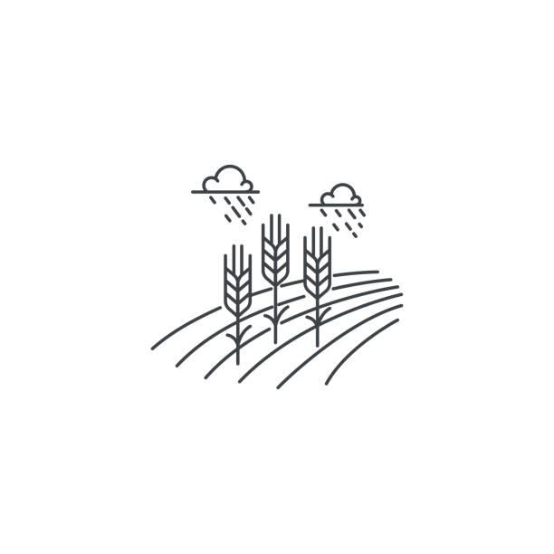 stockillustraties, clipart, cartoons en iconen met lijn pictogram van de tarwe van de boerderij. overzicht illustratie van tarwe veld vector lineaire ontwerp geïsoleerd op een witte achtergrond. boerderij pictogrammalplaatje, element voor landbouw bedrijf, lijn pictogram object. - wheat field