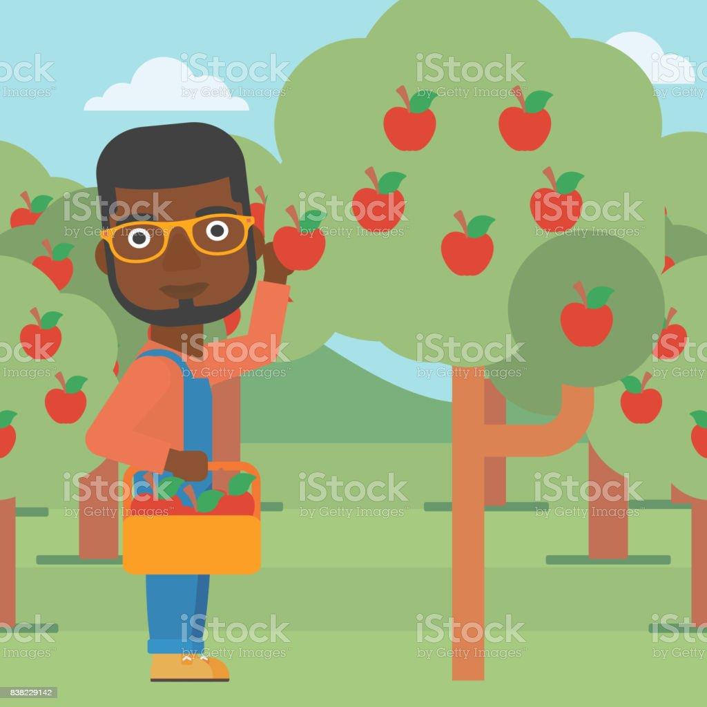 Farmer collecting apples vector art illustration