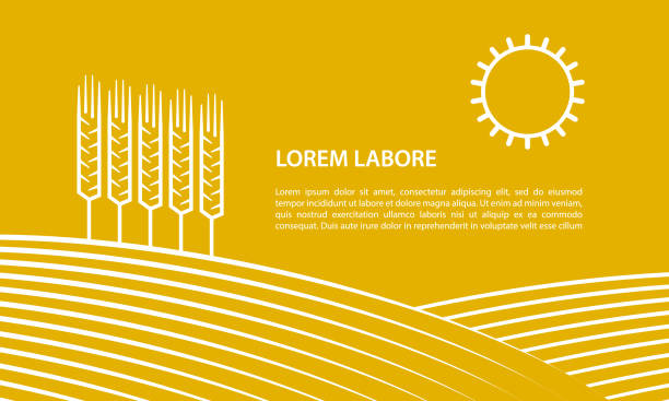 Farmer field and ears of wheat. Linear illustration for banner on a yellow background. Farmer field and ears of wheat. Linear illustration for banner on a yellow background. harvesting stock illustrations