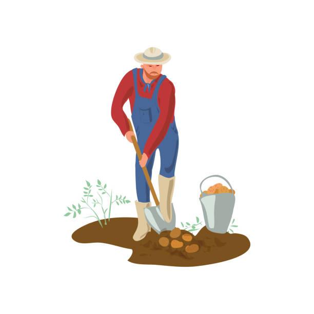 ilustraciones, imágenes clip art, dibujos animados e iconos de stock de el hombre granjero con sombrero y botas está cavando papa en el jardín - social media