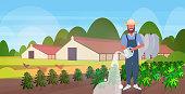 farmer watering cannabis outdoors industrial hemp plantation growing marijuana plant commercial business drug consumption concept farmland field countryside horizontal vector illustration