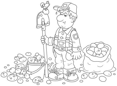 Farmer with his potato crop