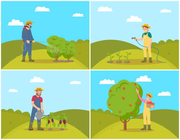 ilustrações de stock, clip art, desenhos animados e ícones de farmer woman harvesting set vector illustration - picking fruit
