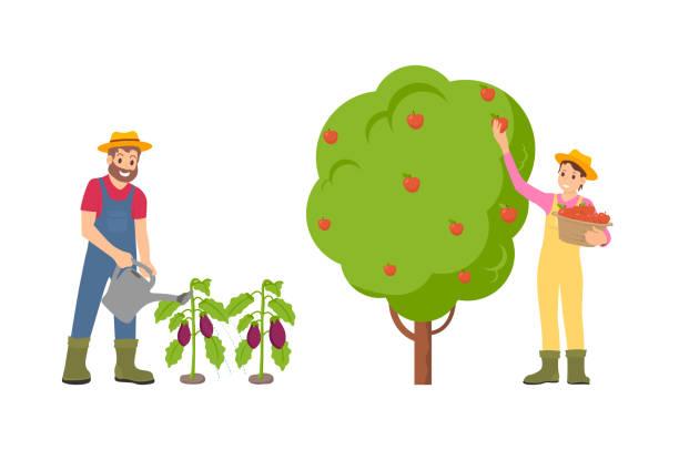 ilustrações de stock, clip art, desenhos animados e ícones de farmers man and woman set vector illustration - picking fruit