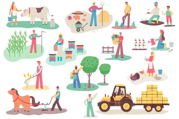 Farmers working on the farm. Men and women vector cartoon flat characters set in different actions isolated on white background. Agriculture illustration. Farmers people on the farm vector cartoon flat set. farmer stock illustrations