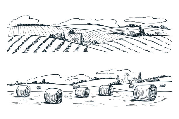 Farming fields landscape, vector sketch illustration. Agriculture and harvesting vintage background. Rural nature view Farming fields landscape, vector sketch illustration. Agriculture and harvesting vintage background. Rural nature view. harvesting stock illustrations