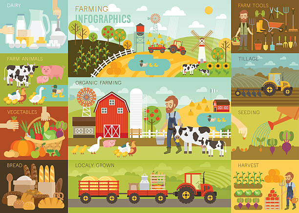 Farming Infographic set with animals, equipment and other objects. Farming Infographic set with animals, equipment and other objects. Vector illustration. farmer stock illustrations