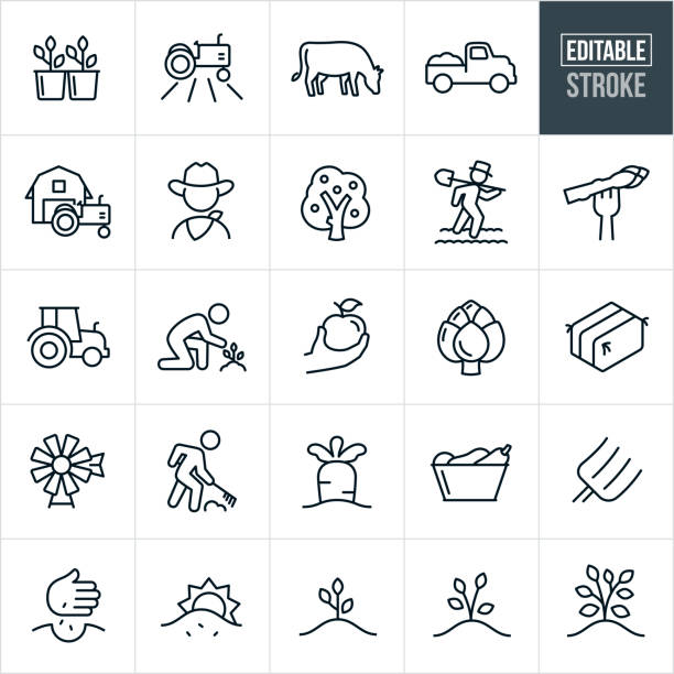 Farming Thin Line Icons - Editable Stroke A set of Farming icons that include editable strokes or outlines using the EPS vector file. The icons include sprouts, plants, tractor, crops, field, cow, livestock, truck, barn, farmer, apple tree, farmer tending fields, asparagus, apple, artichoke, hay bail, windmill, farmer raking, carrot, vegetables, pitchfork, planting seeds, growing plants, growing trees and other related icons. animal stock illustrations