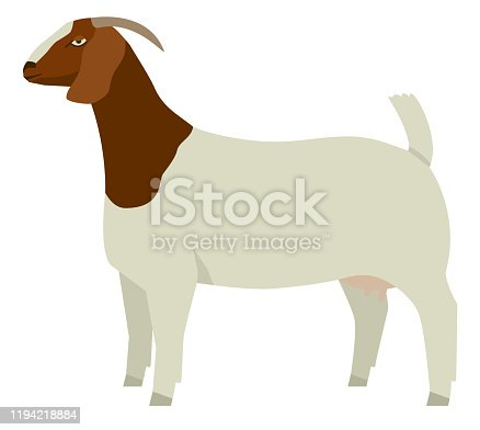 istock Farming today Boer goat Doe Vector illustration Isolated object 1194218884