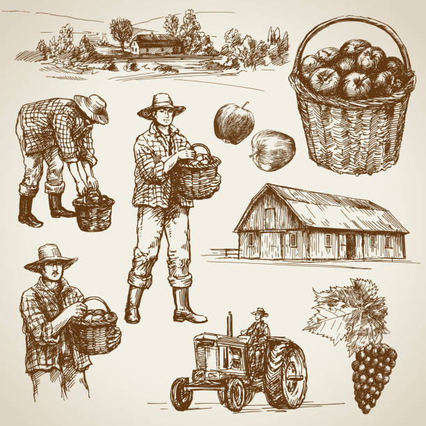 Farmland, harvest on the farm Farmland, harvest on the farm harvesting stock illustrations