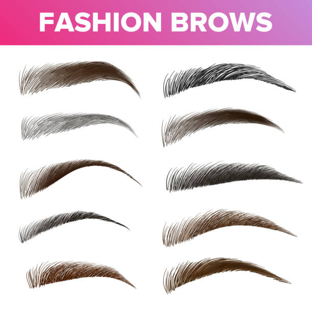 Fashion Brows Various Shapes And Types Vector Set vector art illustration