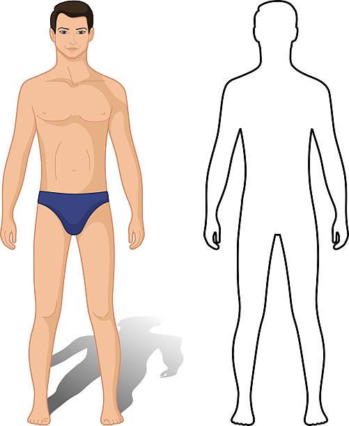 ilustrações de stock, clip art, desenhos animados e ícones de homem moda colorida & descritos modelo figura - tronco nu