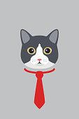 Manx cat gentlemen wear a tie, fashion portrait of cat