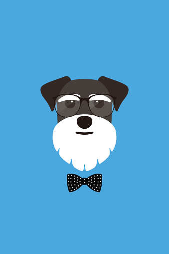 Gentlemen dog wear glasses and bowknot like a man, Fashion portrait of dog, schnauzer