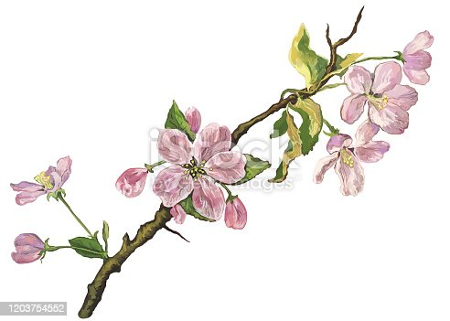 Fashionable spring illustration of flowers vector allegory symbol art impressionism tenderness beauty horizontal branch of a blossoming apple tree with small twisted green leaves isolated on white background