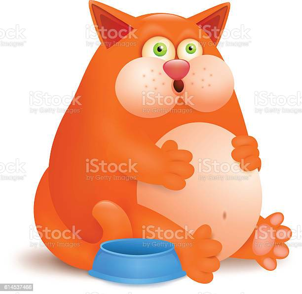 Fat glutton ginger cat with empty bowl on white background vector id614537466?b=1&k=6&m=614537466&s=612x612&h= frq1rs1yniwlvuxgvy5ewonfa 5tfabodly7xr tvm=
