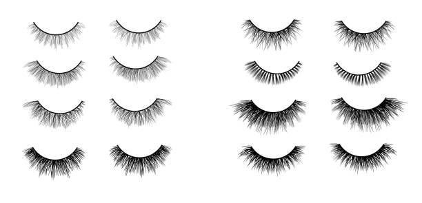 人造睫毛設置隔離在白色背景, 向量插圖 - 睫毛 幅插畫檔、美工圖案、卡通及圖標